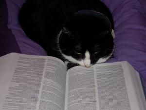 Binkie leest in een woordenboek