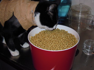 Binkie blog - Binkie eet knabbeltjes uit de voorraadpot