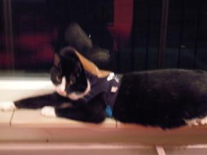 Binkie draagt een truitje met een leren kraag, waardoor hij een beetje aan een huifkar doet denken.