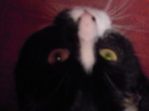 Close-up van Binkies gezichtje.
